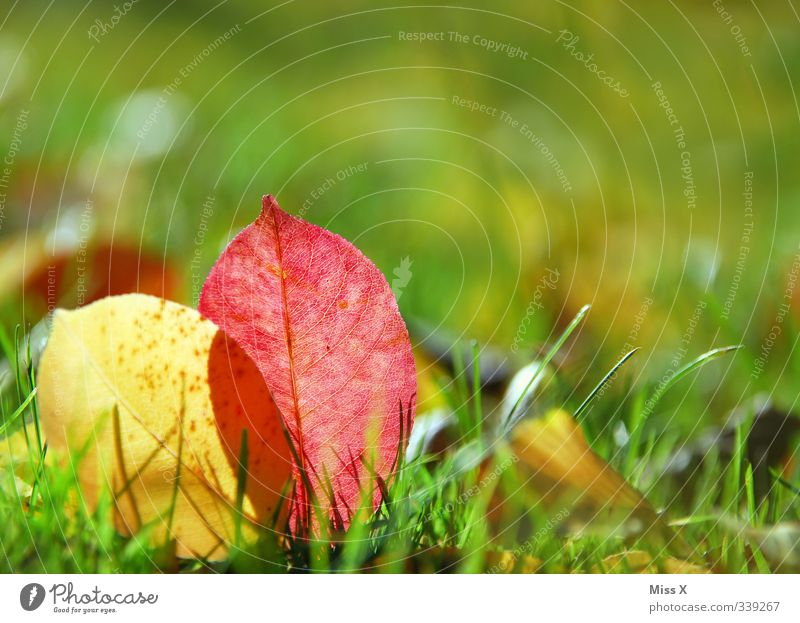 Autumn is here Grass Leaf Meadow To dry up Multicoloured Autumn leaves Autumnal Early fall Autumnal colours Sunlight Colour photo Exterior shot Close-up