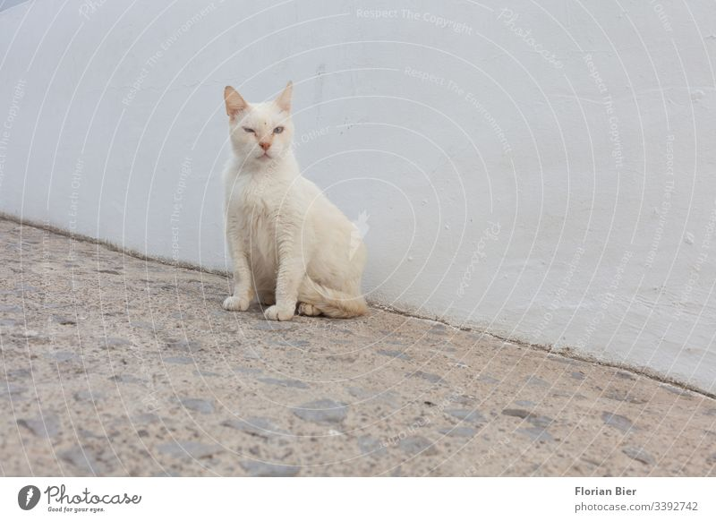 Street cat in a village Animal Cat Wild Prowl Free-living Pet Curiosity Observe Pelt Looking Animal face Cute Sit Paw Looking into the camera Exterior shot