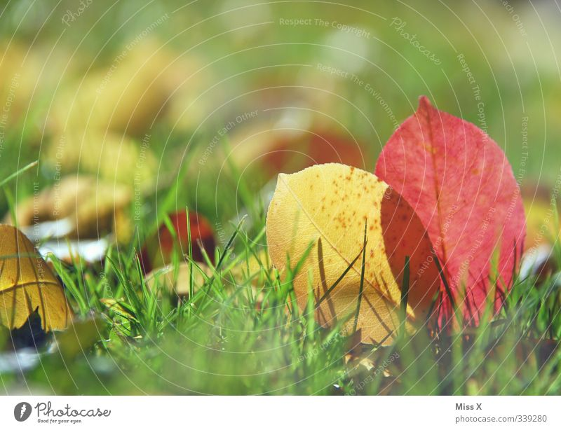 Autumn Nature Leaf To dry up Multicoloured Autumnal colours Autumn leaves Grass Meadow Colour photo Exterior shot Close-up Deserted Copy Space top
