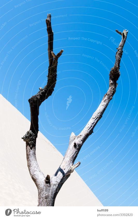 withered tree in desert Drought drought Desert Desert plant Sand sand dunes Blue sky Sanddrift Sandheap diagonal Diagonal lines Minimalistic Climate change
