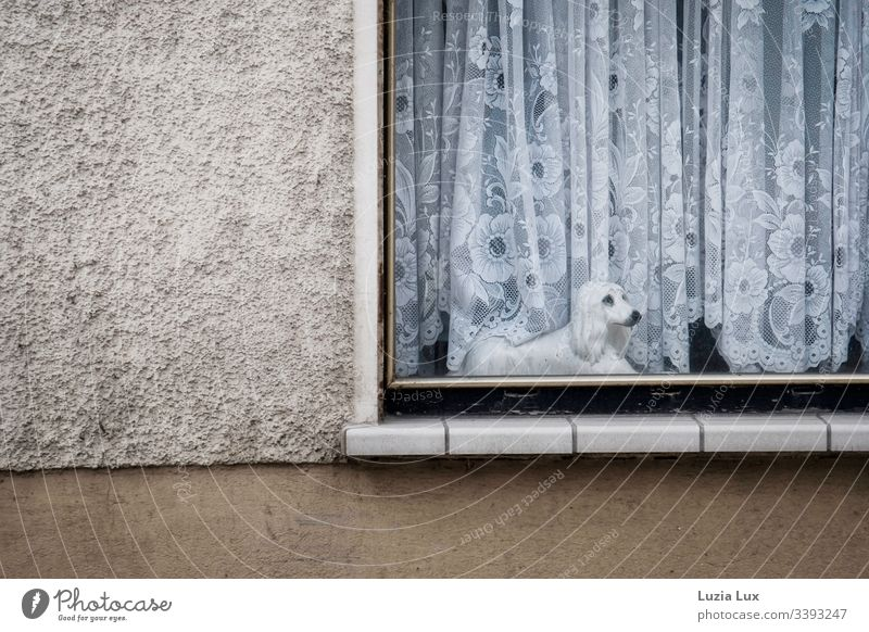 Window to the street, porcelain dog Street house wall Curtain Porcelain dog dog figure sad look Point Drape lace curtain Beige Old peculiar Town Suburb Deserted