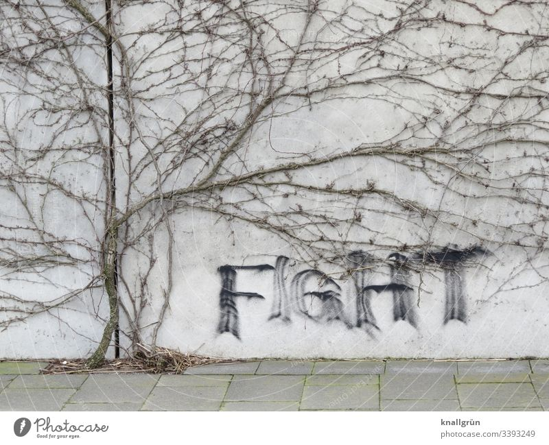 Graffiti on wall framed by a dried-up climbing plant writing Communicate Wall (building) Word Letters (alphabet) Creeper Shriveled walkway slabs fight