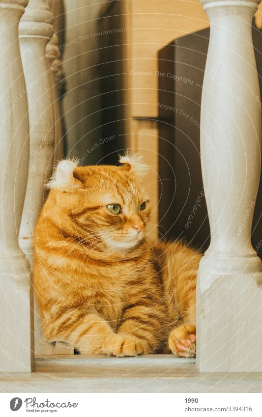Orange cat chilling Cat Pet Animal portrait Domestic cat Cat eyes Cat lover relax Relaxation orange cat Kitten kitten cat cat portrait Whiskers Home Mammal Cute