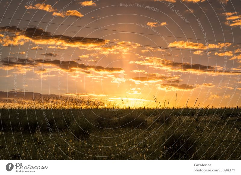 The sun sets, sparrows chatter, grasses light up green Brown Orange Sky Nature Grass blossom Dusk Willow tree Summer Sunset Meadow Landscape Sparrows birds