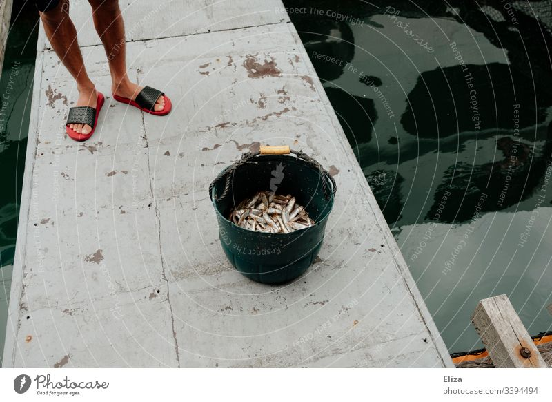 The legs of a fisherman next to a bucket of caught fish next to a water basin on a fish farm in Vietnam Fisherman Fresh Bucket Nutrition Livelihood Basin