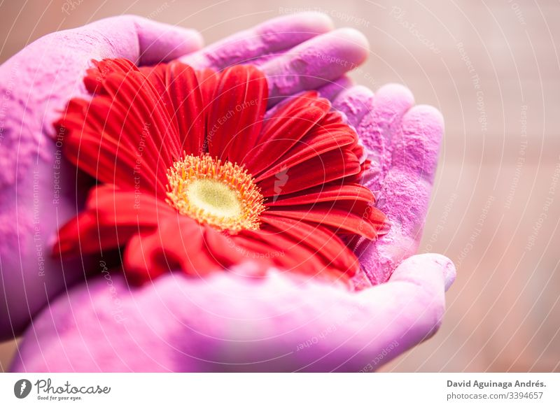 woman with a flower in the painted hands Purple red Blossom Natural Nature Flower Beautiful Colour Floral Pink