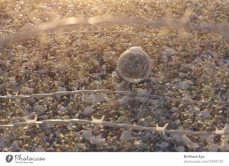 Glass ball behind a barbed wire fence in the morning light Melt Frost Frozen Freeze Morning Fence Barbed wire fence Field Meadow Crystal ball warm Warmth Snow