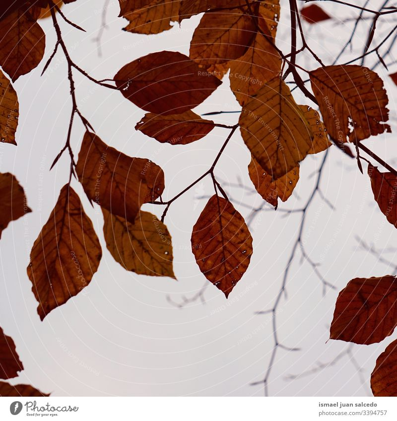 tree brown leaves in the nature in winter season branches leaf natural foliage abstract textured outdoors background beauty fragility freshness wintertime