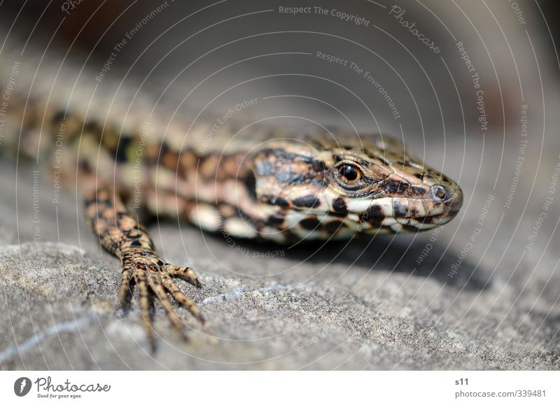 Nature Summer Animal Eyes Warmth Legs Rock Feet Lie Elegant Wild animal Fingers To enjoy Warm-heartedness Observe Curiosity
