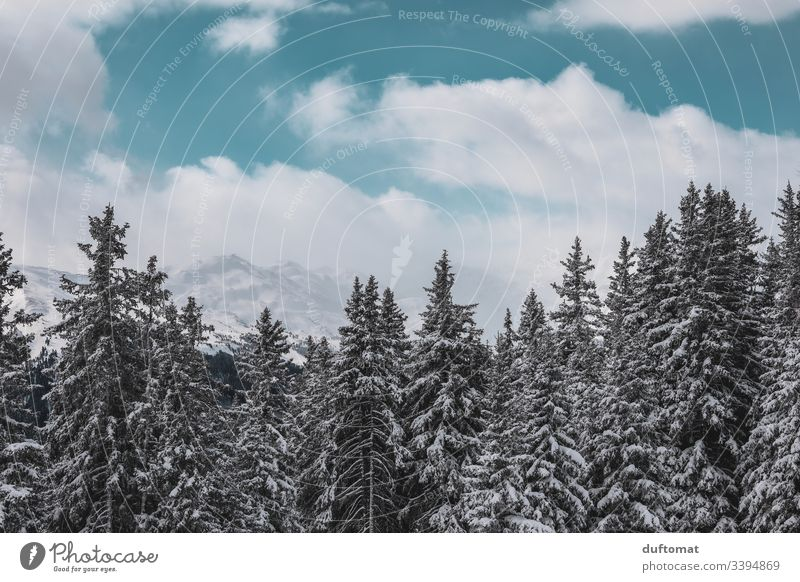 Snow-covered fir trees in front of an alpine panorama mountains Skiing Valley skis Cold Winter Alps Landscape holidays vacation Ski run Sky Fresh