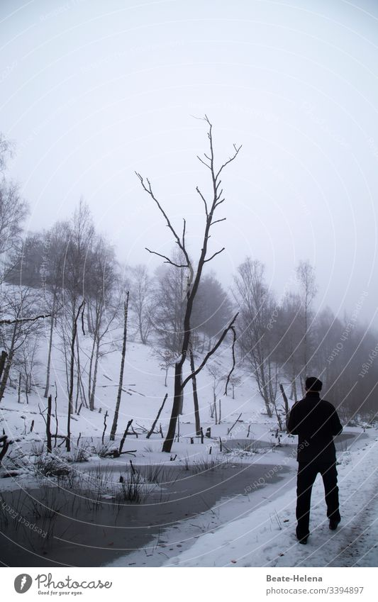 Winter has come! black-white chill To go for a walk Trees Bleak Snow Water Death of a tree bare trees Environment