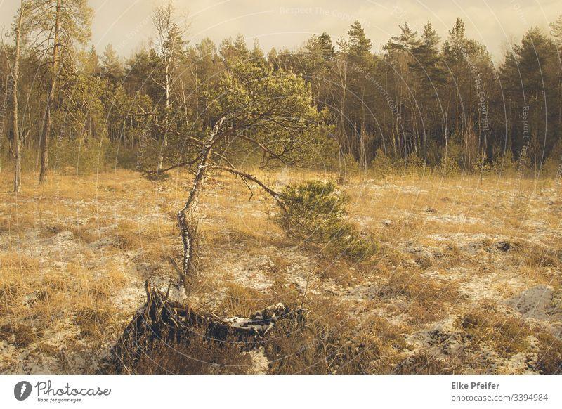 "Moorland in the Waldviertel Bog Moor Landscape"" Colour photo Environment Marsh Calm Nature trees Plant Deserted Forest Austria Lower Austria silent"