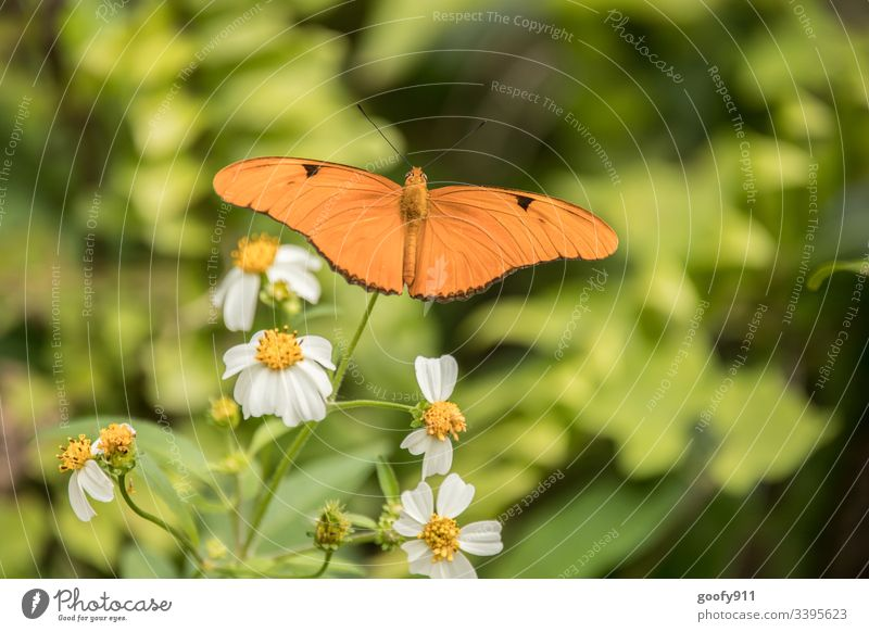 butterfly Butterfly Insect Feeler Nature Close-up Sit Animal Animal portrait Grand piano Detail Delicate Colour photo Exotic Plant bleed flaked Flying Park