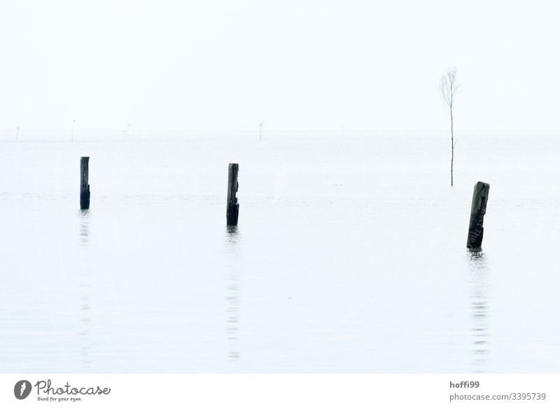 Piles in water with fog white sky Low tide three Minimalistic minimalistic pattern Nature reserve stake white background Deserted fairway Harbour