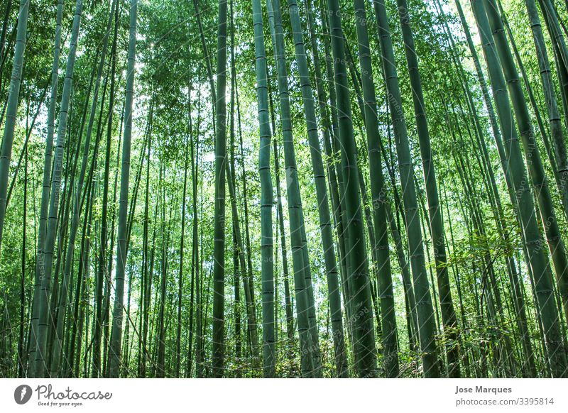 bamboo forest Bamboo Forest Green Nature Japan Travel Virgin forest Exterior shot Environment