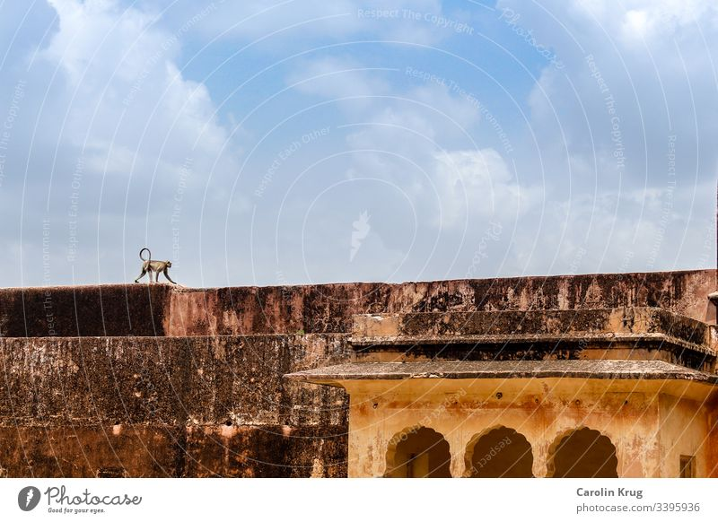 A monkey walking over the huge palace walls Palace Loneliness India Rajasthan fort travel exoticism discovery explore Sky Asia Vacation & Travel Architecture