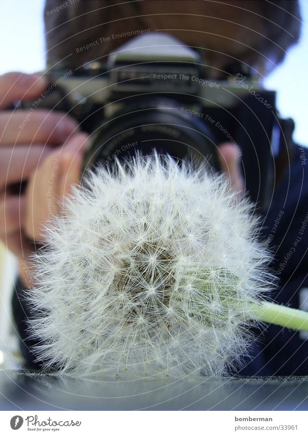The photographer with the dandelion Photographer Dandelion Photographic technology Camera