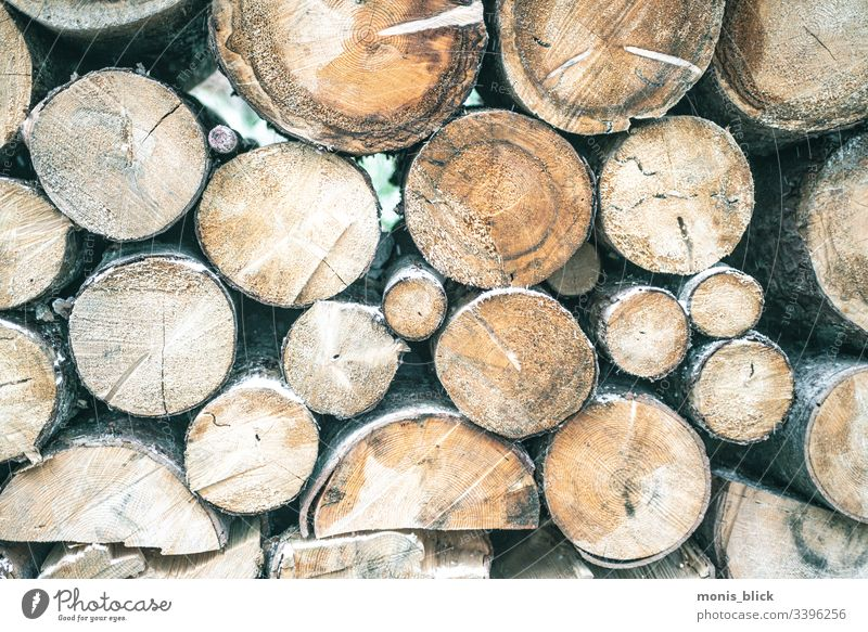 Wood stacked felled tree trunks Tree Tree trunk Tree bark Branch Forest Nature Climate change Climate protection Deserted Environment Woodcutter stacked trees