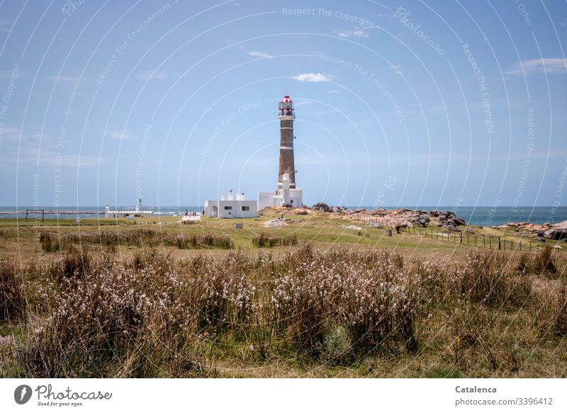"""The sky, the sea, a lighthouse. In the foreground the beach garden is growing wildly mixed up Beach Landscape"""" Lighthouse Ocean Sky Coast Vacation & Travel"""
