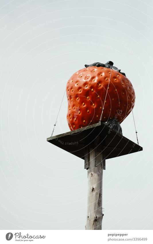 Strawberry on a wooden pedestal for strawberry sales stand Wood Fruit Red Food Colour photo Delicious Nutrition Fresh Close-up Deserted Vegetarian diet Berries