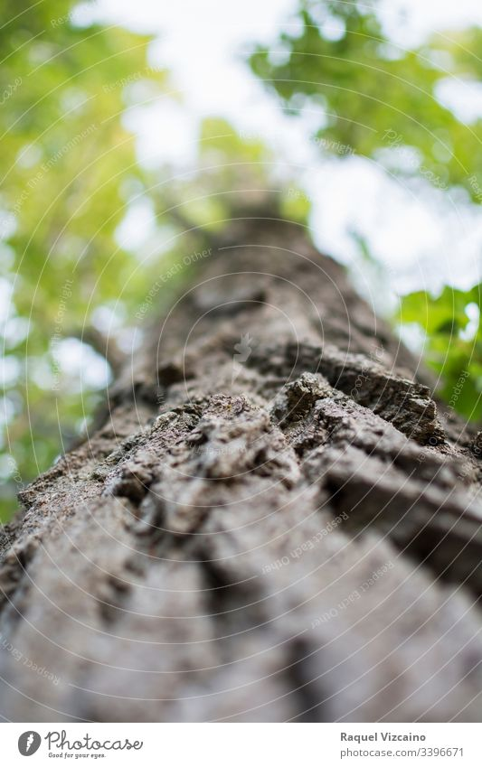 Low angle of a tree trunk, focused in the foreground and its green cup in the background and out of focus. treetop nature forest moss wood low angle plant bark