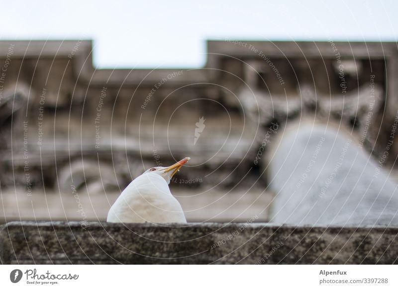 lack of interest Seagull Gull birds Column Manmade structures Exterior shot Animal Bird Colour photo Deserted Venice Animal portrait Disinterest