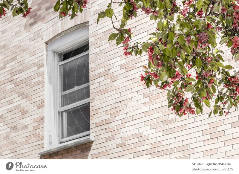 Window with a view over a blooming tree window building house home brick wall trees blossom spring springtime branch branches blossoming flowers flowering