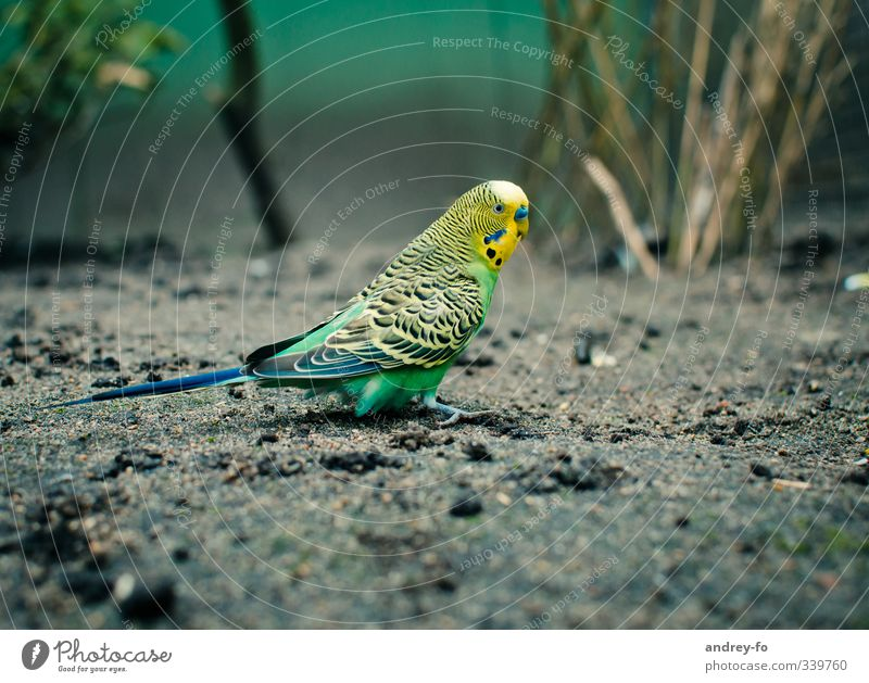 Nature Green Animal Environment Yellow Small Bird Earth Wild animal Cute Zoo Environmental protection Love of animals Parrots Animal protection Budgerigar