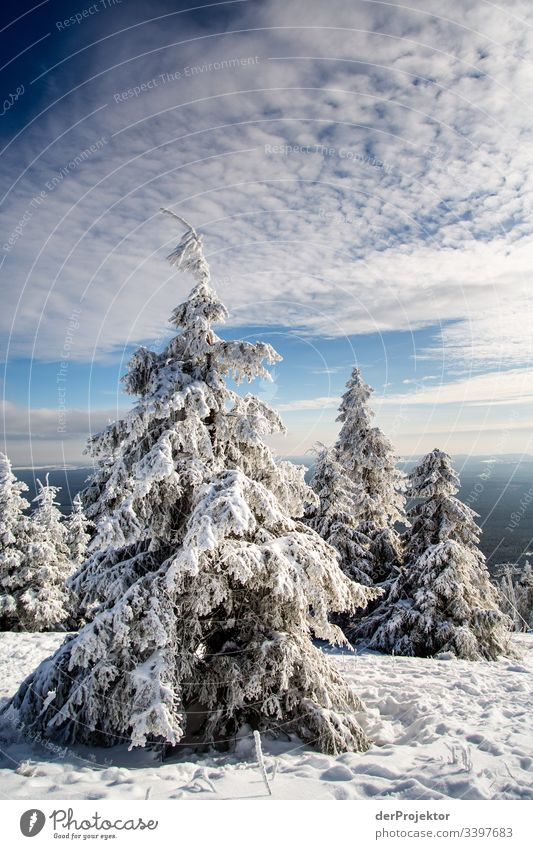 Harz winter landscape IV Trip Adventure Far-off places Freedom Vacation & Travel Tourism Winter vacation Hiking Environment Nature Beautiful weather Plant