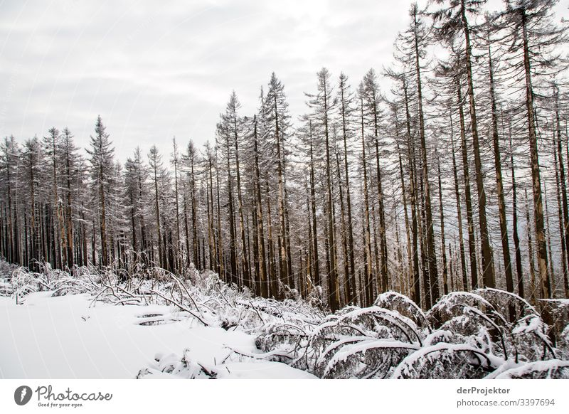 Harz winter landscape Wide angle Panorama (View) Central perspective Deep depth of field Light Day Copy Space middle Copy Space bottom Copy Space right