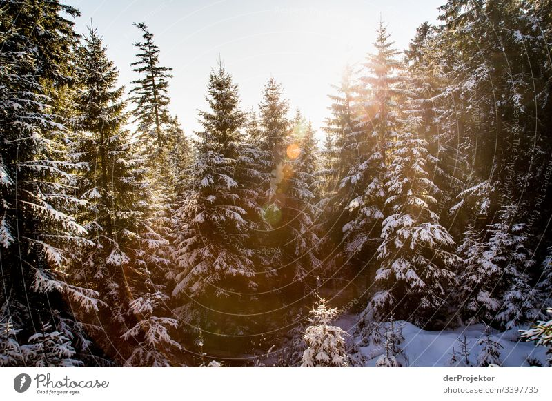 Harz winter landscape II Trip Adventure Far-off places Freedom Vacation & Travel Tourism Winter vacation Hiking Environment Nature Beautiful weather Plant