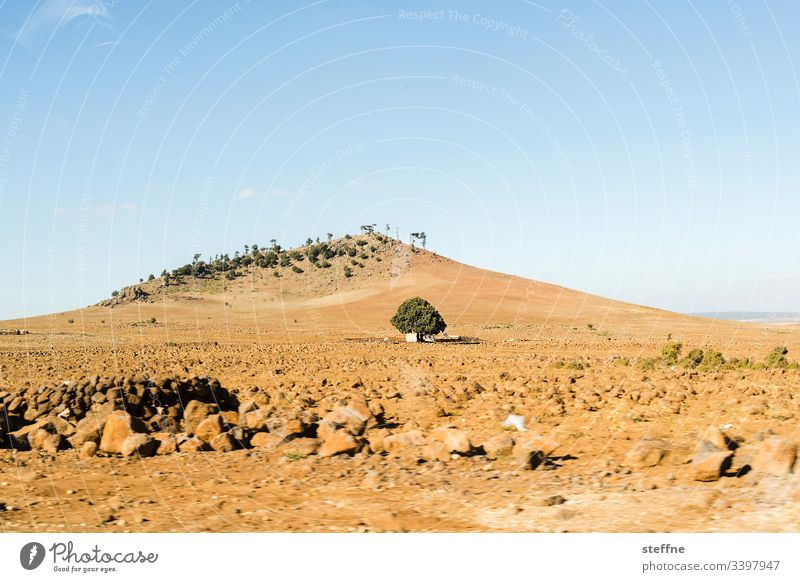 lone tree in front of hill Tree Gravel Hill Beautiful weather Motion blur ardor
