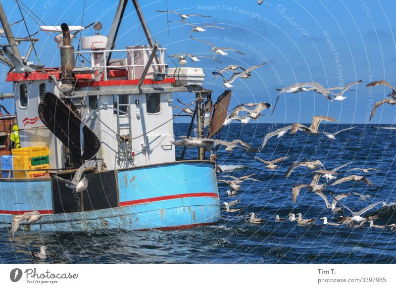 journey home Baltic Sea Cutter fishing cutter Seagull Colour photo Bird Coast Exterior shot Ocean Deserted Nature Animal Water Day Environment Waves Grand piano