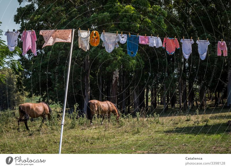 rope team | baby clothes hanging to dry in the summer breeze, two horses grazing in the background Layette Clothesline Colour photo Clothing Deserted