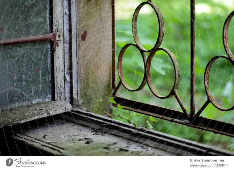 Nature Old Summer House (Residential Structure) Window Wall (building) Grass Architecture Wall (barrier) Building Wood Stone Garden Metal Park Design