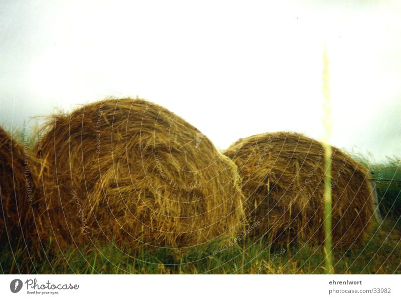 straw bale Agriculture Sylt Vacation & Travel Environmental protection Green beam Island Beach dune crop circles Gold
