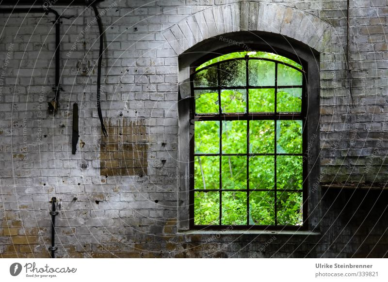 Nature Old Green Summer Window Wall (building) Architecture Wall (barrier) Building Gray Stone Garden Metal Park Illuminate Bushes