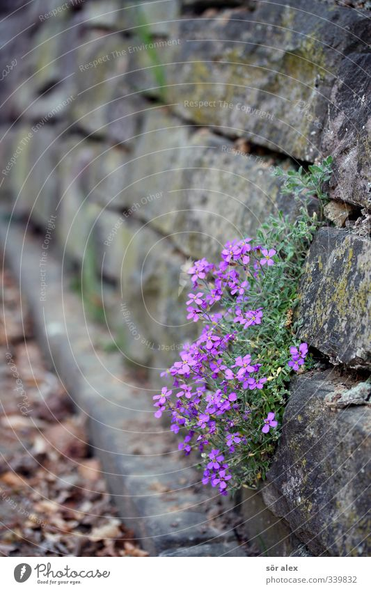 Beautiful Plant Flower Animal Environment Sadness Spring Wall (barrier) Blossom Exceptional Happiness Joie de vivre (Vitality) Grief Violet Longing Endurance