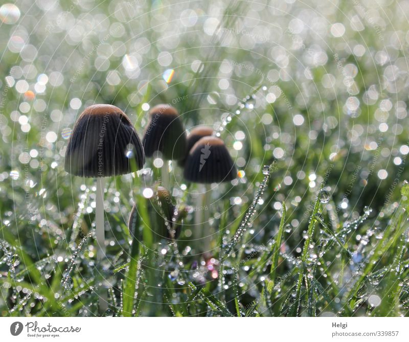 Subtenant. ...in the lawn. Environment Nature Plant Drops of water Autumn Grass Foliage plant Mushroom Garden Glittering Stand Growth Esthetic Exceptional