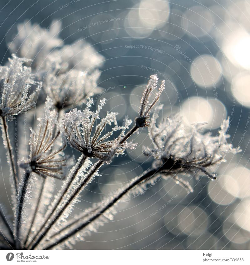Nature Blue Beautiful White Plant Winter Environment Cold Gray Natural Moody Exceptional Ice Illuminate Stand Esthetic
