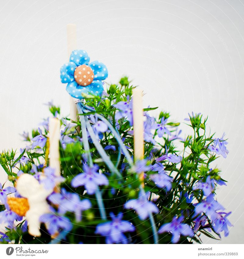bunch of flowers Decoration Gardening Plant Flower Blossom Bouquet Authentic Fragrance Fresh Small Natural Cute Blue Multicoloured Green Violet Orange Life