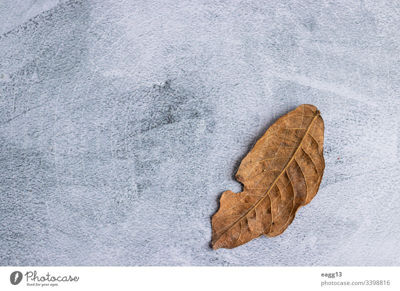 Marbling gray background with dried leaves on the edge abandoned autumn autumnal backdrop backgrounds batch beautiful beauty botany bright brown close-up