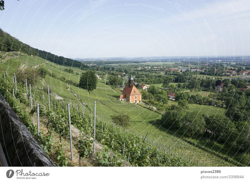 View over the vineyards of Dresden Pillnitz to the hills of Saxon Switzerland winery grape church farm germany green nature agriculture europe landscape summer