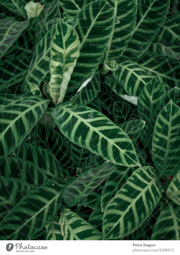 Tropical indoor plants Bird's-eye view Shallow depth of field Contrast Evening Pattern Macro (Extreme close-up) Detail Close-up Exterior shot Colour photo