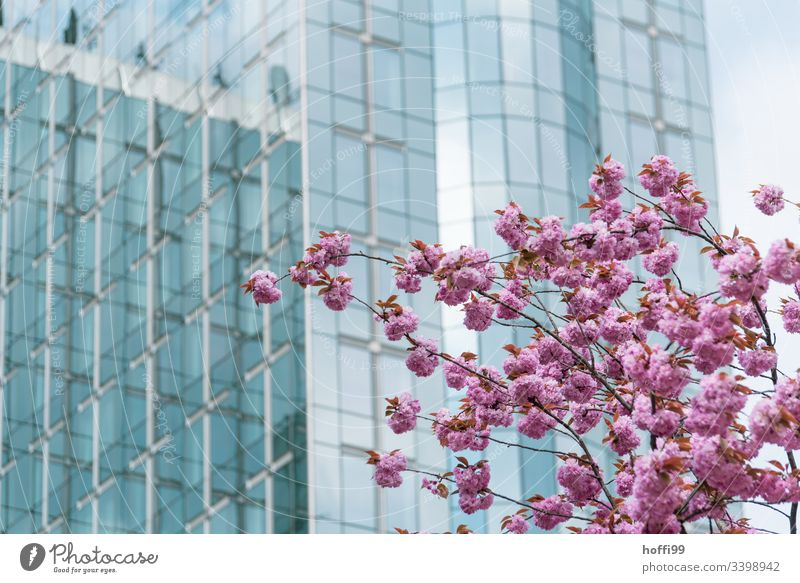Spring in Brussels Europe European parliament Deserted Kisbloom blossoms Spring fever Pane Glas facade Politics and state Blue Alliance Society