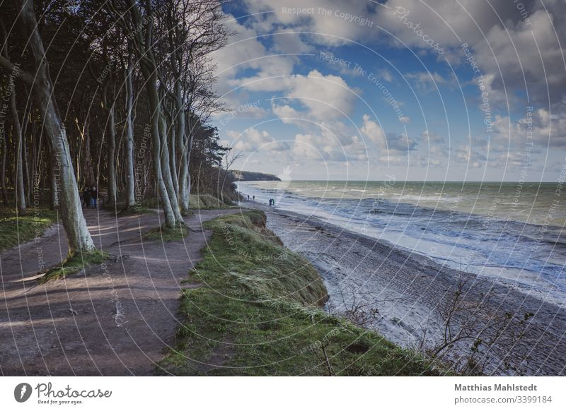 On the beach of Warnemünde Tree out Wood Cliff Rich in contrast Nature Plant travel Sand Beach Ocean Vacation & Travel Water Coast Exterior shot Landscape