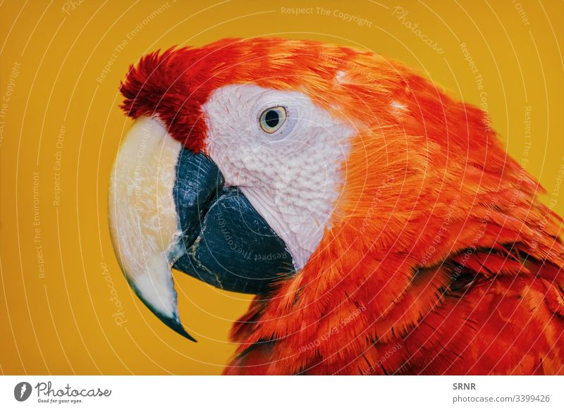 The Macaw Parrot animal ara avian avifauna beak bill bird feathered macaw neb parrot perched portrait psittacidae zygodactyl
