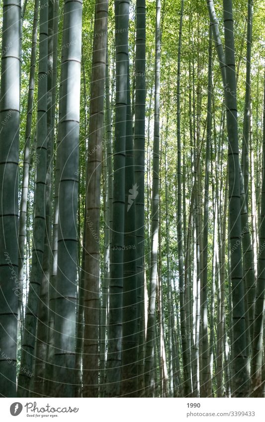 Another Bamboo Forrest Bamboo stick bamboo forest Japan Travel photography Green Plant Nature Asia Forest Exterior shot Exotic Shadow
