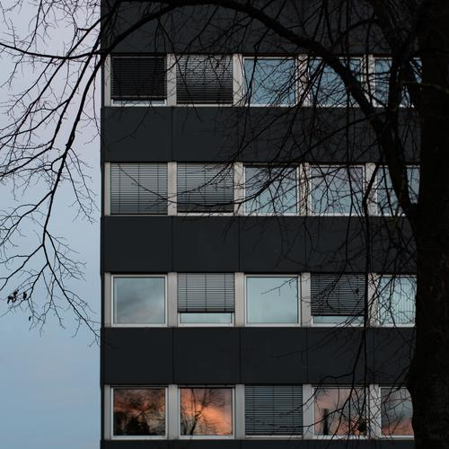 the last sunlight in the window - it gets uncomfortable Window Facade Reflection Tree Gloomy Glas facade leaves dreariness Dark somber Elegant urban Expulsion