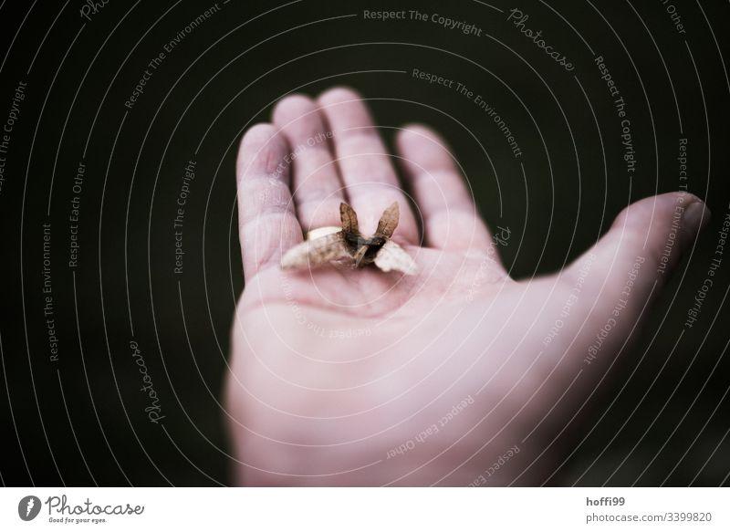 Hand with leaf Trust Relationship Force Detail Retro Positive Senior citizen Life Puzzle Arrangement Contact Resolve Touch Adults Close-up Communicate
